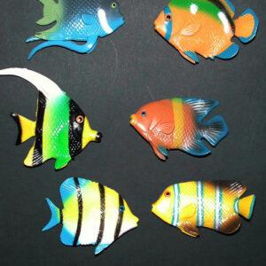 Tropenfische, Sortiert Stück