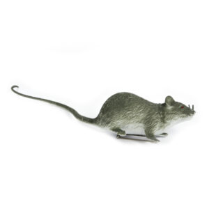 Ansteck- Ratte, grau